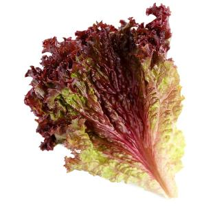 Coloured Lettuce